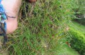 Parches de hierba