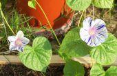 Embellecimiento de Apocalipsis jardín/patio trasero