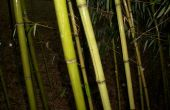 Tubo de almacenamiento bambú