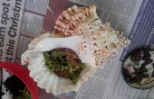 Terrarios con conchas y frascos