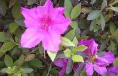 Hermoso jardín flores