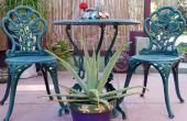Una planta con propósito: Cómo cuidar de Aloe Vera