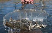 Cómo hacer un pez atrapar en 30 segundos