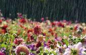 Sistema de medición de precipitaciones para una colmena