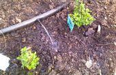 Su jardín de agua con agua de lavado de gris