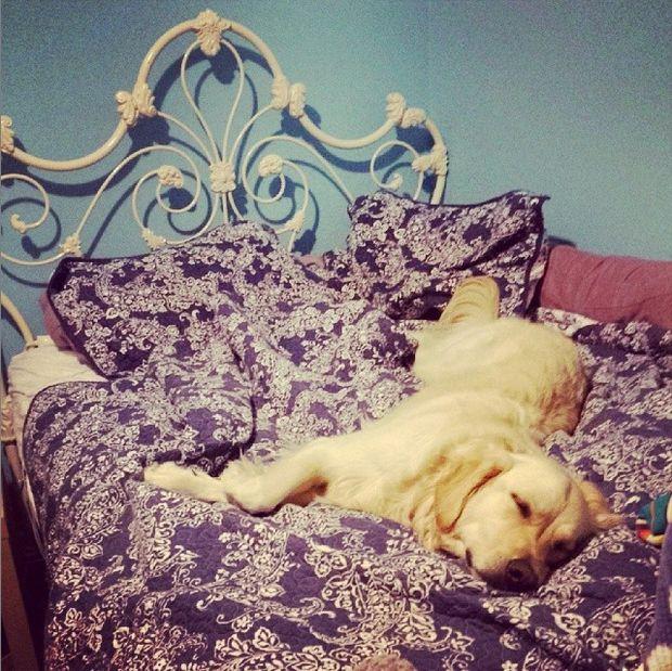 Cómo guardar su cama - askix.com