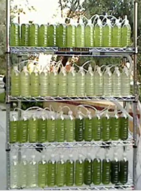 Un Biorreactor De Algas De Las Botellas De Agua Recicladas