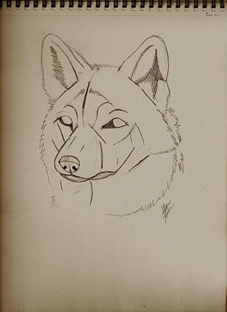 Guias Para Dibujar Lobos Askix Com