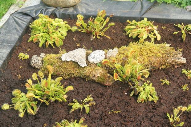 Artificial pantano de la turba para plantas carnívoras / Paso 4 ...